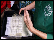 germination-testing-method
